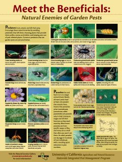 Meet the good guys: Beneficial insect poster featuring the natural enemies of garden pests.