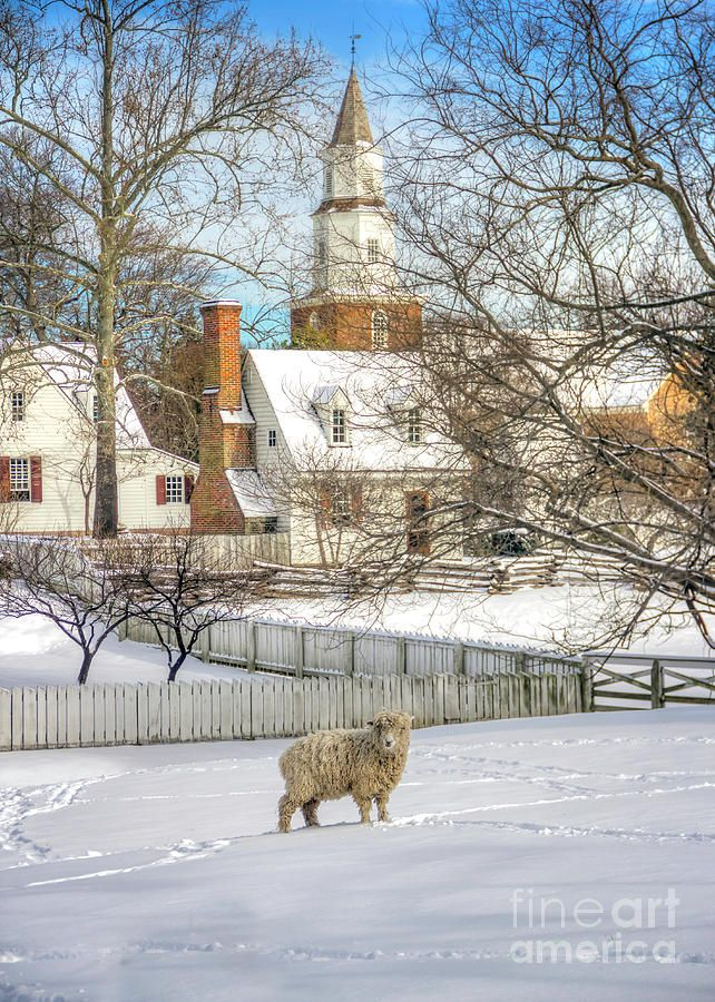 Williamsburg Christmas 2019.Wooly Winter In Colonial Williamsburg Colonial