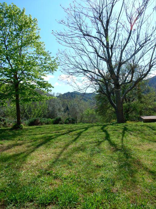 tree shade near Badia A Coltibuono Tuscany