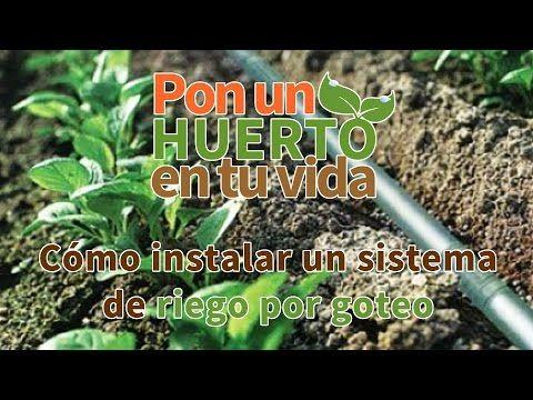 Cómo instalar un sistema de riego por goteo - Pon un huerto en tu vida - YouTube