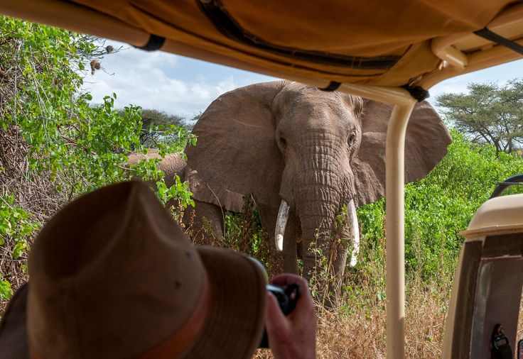 Picture of an elephant approaching a safari vehicle, Maasai Mara National Reserve, Kenya