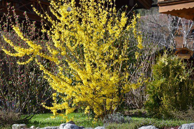 Gelbes Frühlingserwachen...