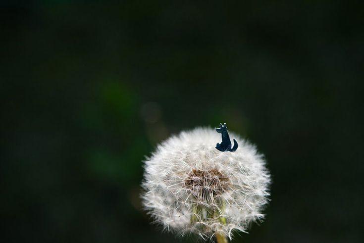 kouichi-chiba-photography-4