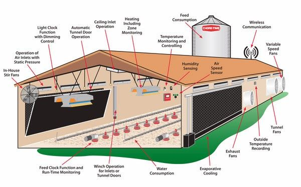 Poultry farm house - Feasibility study on poultry farming