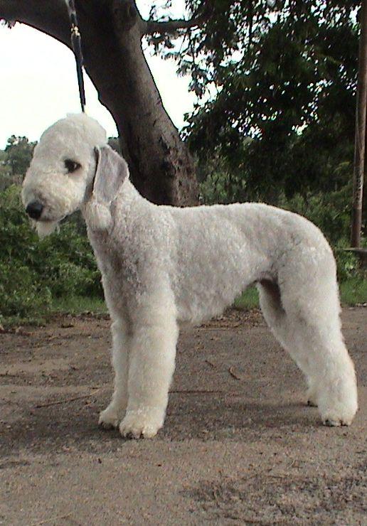 rare dog names - 516×740