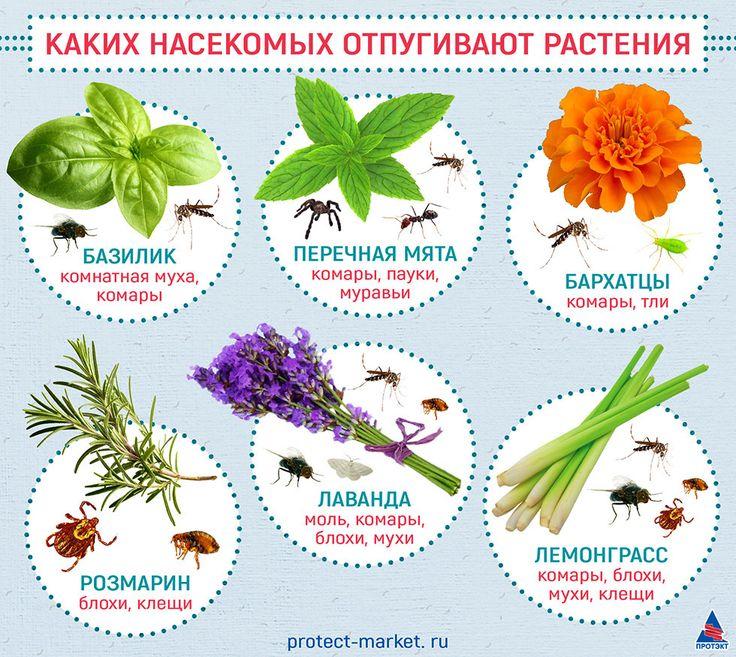 какие растения не любят комары