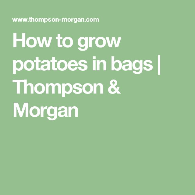 How to grow potatoes in bags | Thompson & Morgan