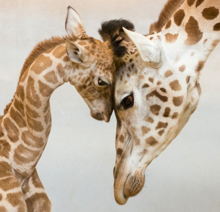 AMAZING: 25 Wonderful Parenting Moments in the Animal World That Went Viral