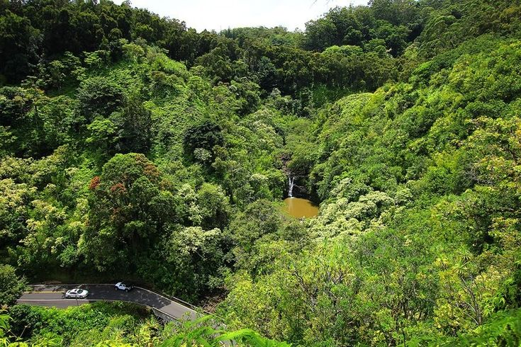 Тропические сады острова Мауи - Путешествуем вместе