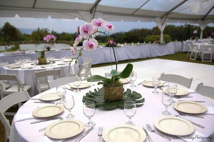 Planta de Orquídea como centro de mesa