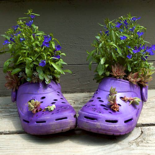 Baby Croc Pots: Gardens Ideas, Container Gardens, Crocs, Old Crock, Flowers Pots, Gardens Container, Old Shoes, Shoes Organizations, Kid