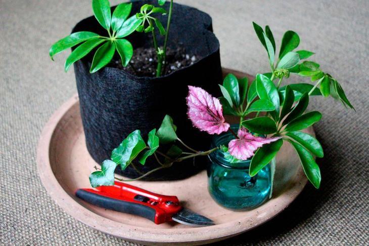 Желаете увеличить численность своих комнатных растений и не затратить на это ни копейки? Либо вырастить эффектный цветок, чтобы преподнести его в качестве подарка? Либо старое растение вы хотите помен...