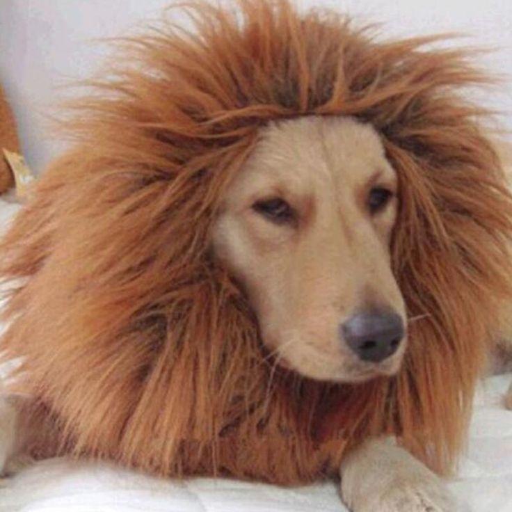 Mooie Kleine Grote Huisdier Kostuum Hond Lion Pruiken Mane Hair Festival Party Fancy Dress Halloween Kostuum huisdier leeuw haaraccessoires(China (Mainland))