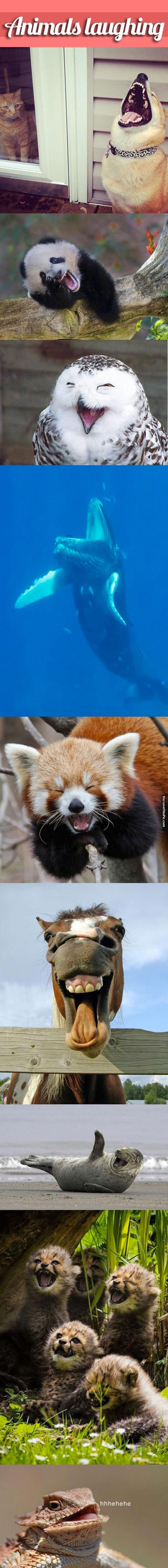 "Cute pics of animals ""laughing"""