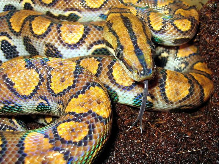 World's Most Amazing Things: Amazing Colorful Snakes - Most Beautiful Snakes of the World