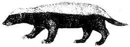 """I'd love to draw this on plate/bowl/mug and then write """"Honey Badger Don't Care"""""""