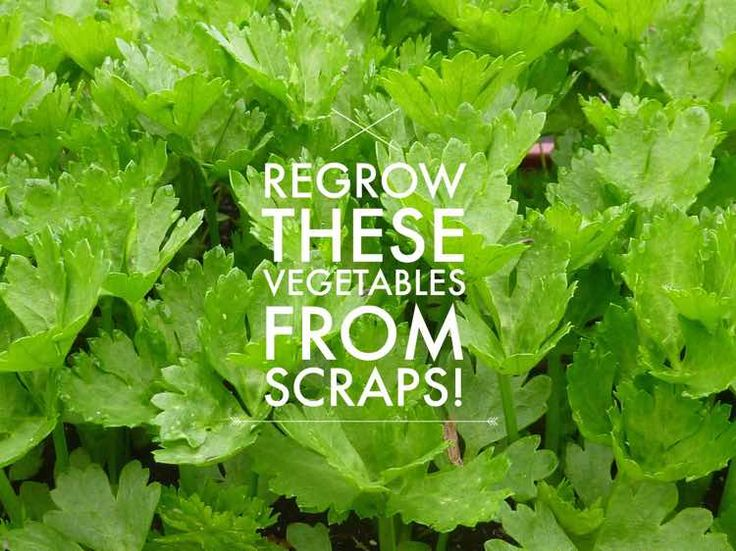 regrow these 7 fruits and vegetables from scraps