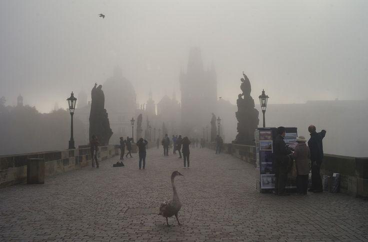 """IlPost - Un cigno attraversa il Ponte Carlo a Praga, nella Repubblica Ceca. I cigni sono presenti in buona parte del mondo e sono parenti delle oche, fanno parte infatti della famiglia degli anatidi. SPOILER! Come imparano i bambini grazie al """"Brutto - Un cigno attraversa il Ponte Carlo a Praga, nella Repubblica Ceca. I cigni sono presenti in buona parte del mondo e sono parenti delle oche, fanno parte infatti della famiglia degli anatidi. SPOILER! Come imparano i bambini grazie al """"Brutto…"""