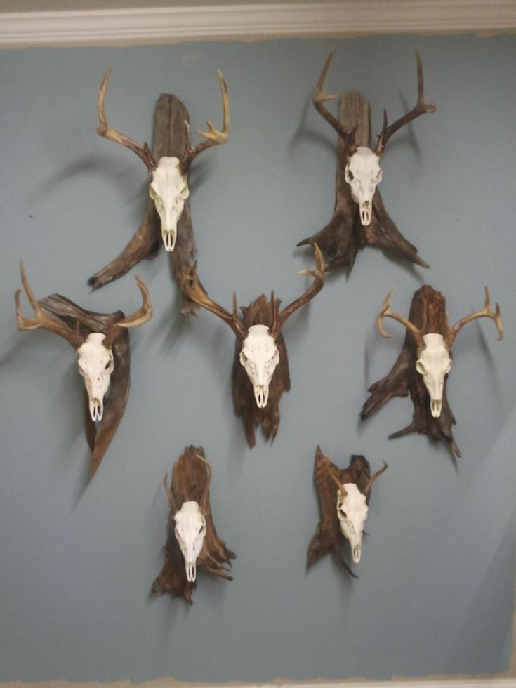 european deer mount - Google Search