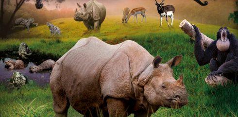 Le Zoo de La Flèche étend son parc de 4 hectares supplémentaires et accueille plus de 10 nouvelles espèces