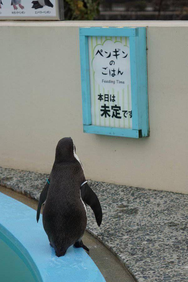ごはんの予定を見た哀愁ただようペンギンの背中