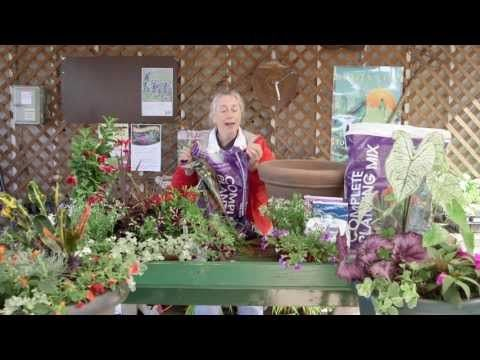 How to Plant a Combination Pot