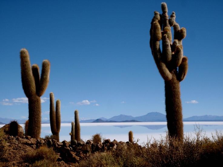 Isla Incahuasi, a rocky island covered in cactus in the middle of Salar De Uyuni, Bolivia
