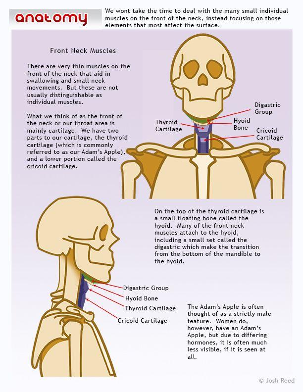 Character Design Challenge Facebook : Mejores imágenes sobre character anatomy neck en