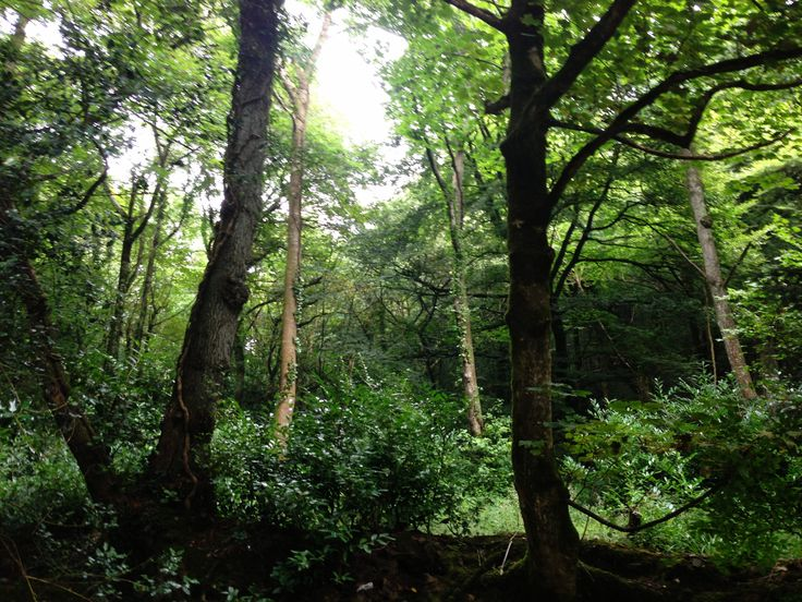 Gweek Woods ~ Gweek is derived from the Cornish 'Gwig' which means forest village.