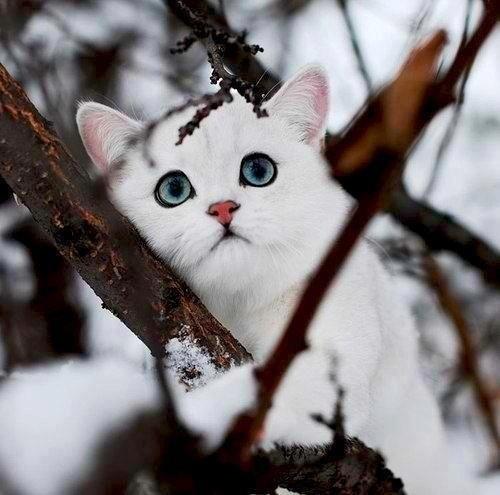 That's a cute kitty!!!