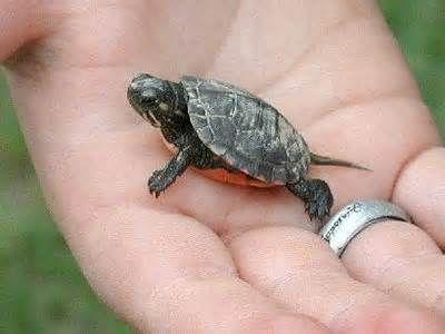 cute animal babies - Yahoo! Image Search Results