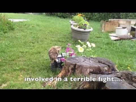 Smell the Flowers - Farm Kittens! #cute #kittens www.hovenfarms.com