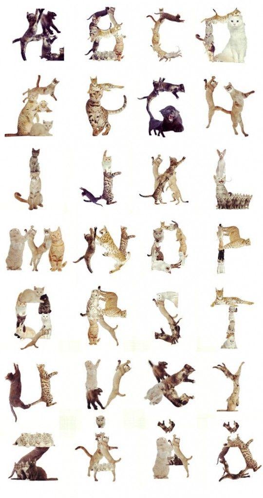 Kitty alphabet