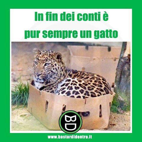 #felino #gatto #bastardidentro www.bastardidentro.it