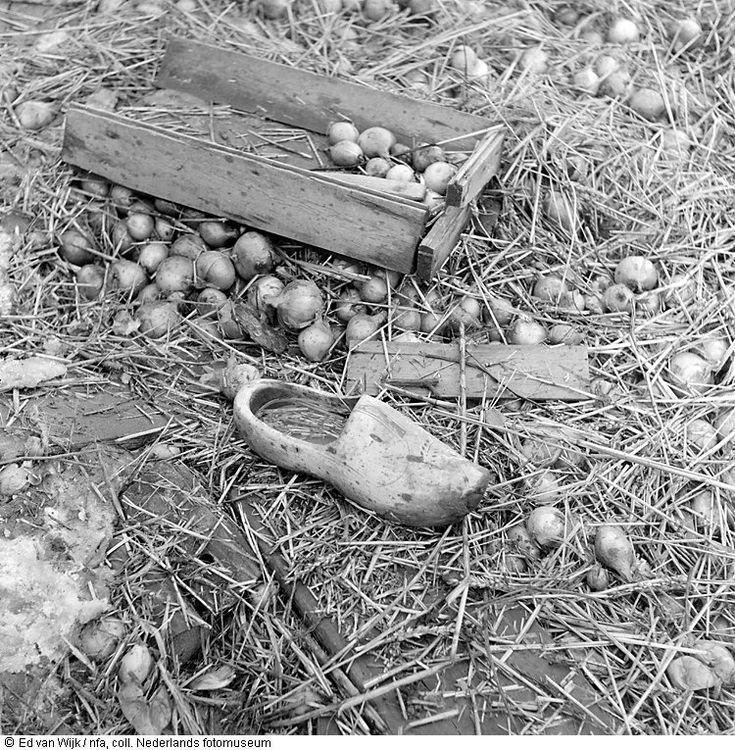 Aangespoelde klomp en uien, watersnoodramp, Zeeland (1953)