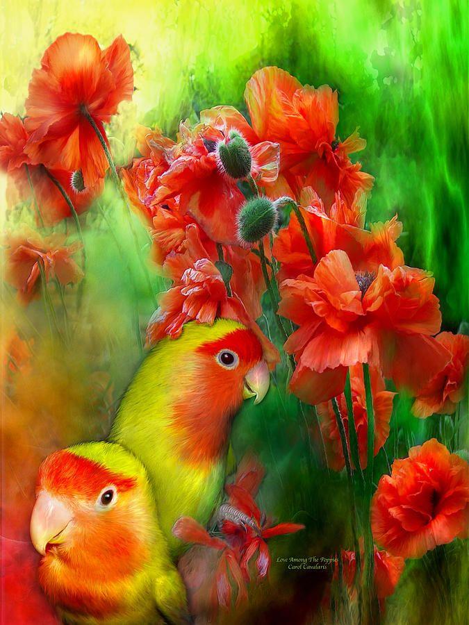 Открытки с попугаями с добрым утром