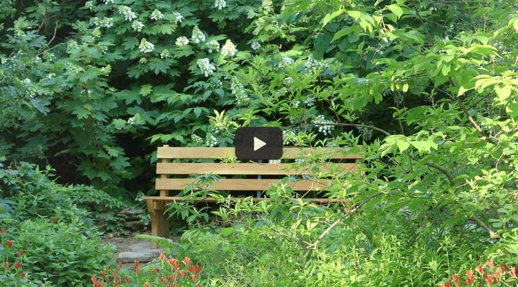 Living landscape videos