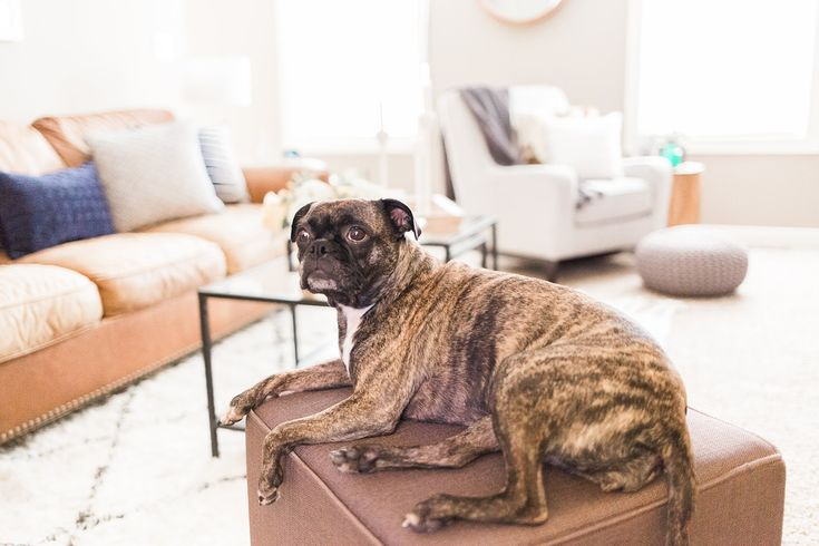 Organize Your Home With These Pet Crate Design Ideas