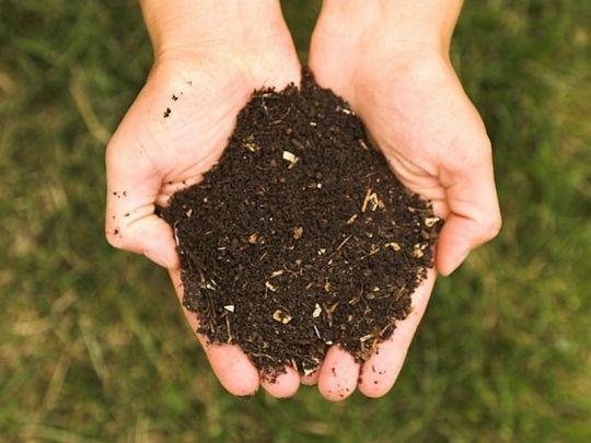kompost fot. Panphage CC BY 2.5 Wikimedia Commons