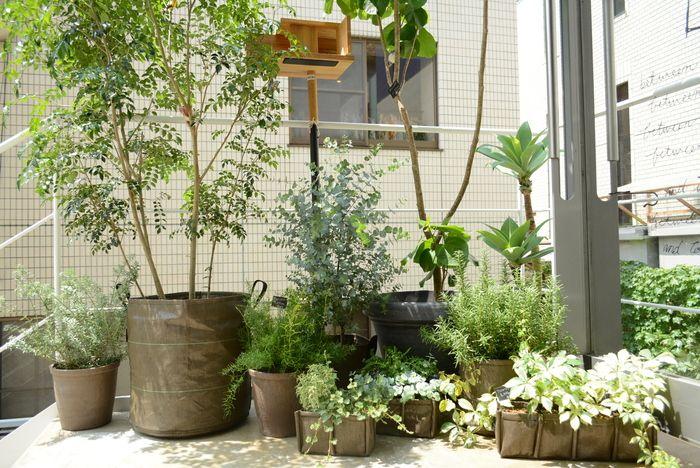 軽くて持ち運びしやすいので、どこでも手軽にガーデニングを楽しめます。たくさん集めるとその一角が畑になったみたいで都会のオアシスのようですね♪日のあたる場所へ植物たちを移動させてあげましょう♪