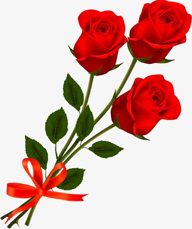 Three Roses Png Bow Bow Tie Campanulaceae Green Hand Three Roses Beautiful Wallpapers Backgrounds Beautiful Wallpapers