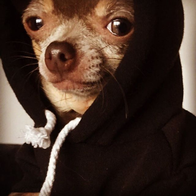 Natalie Appleton's adorable Chihuahua looks so cute in this dog hoodie!
