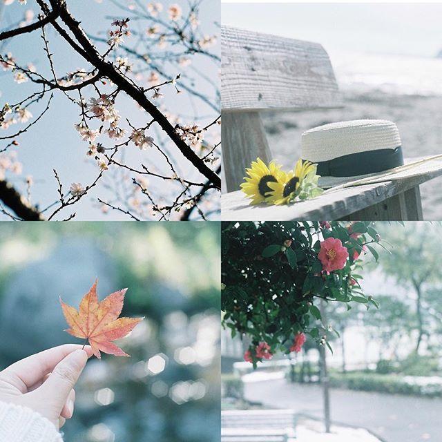 【______n152】さんのInstagramをピンしています。 《* * 春夏秋冬 * * 春だけはまだフィルムで撮れていないので十月桜です。 * * 今年も色々な場所に行って色々な写真が撮れたことに感謝しています。 そして写真につながる人の繋がりも大切にしていきたいです。 * * #四季 #春夏秋冬 #十月桜 #桜 #ひまわり #向日葵 #麦わら帽子 #紅葉 #雪 #山茶花 #サザンカ #フィルム #フィルムカメラ #フィルム部 #フィルムに恋してる #コンタックスアリア #film #filmcamera #filmphotography #contaxaria》