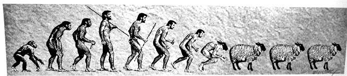 Evolución de la sociedad humana.