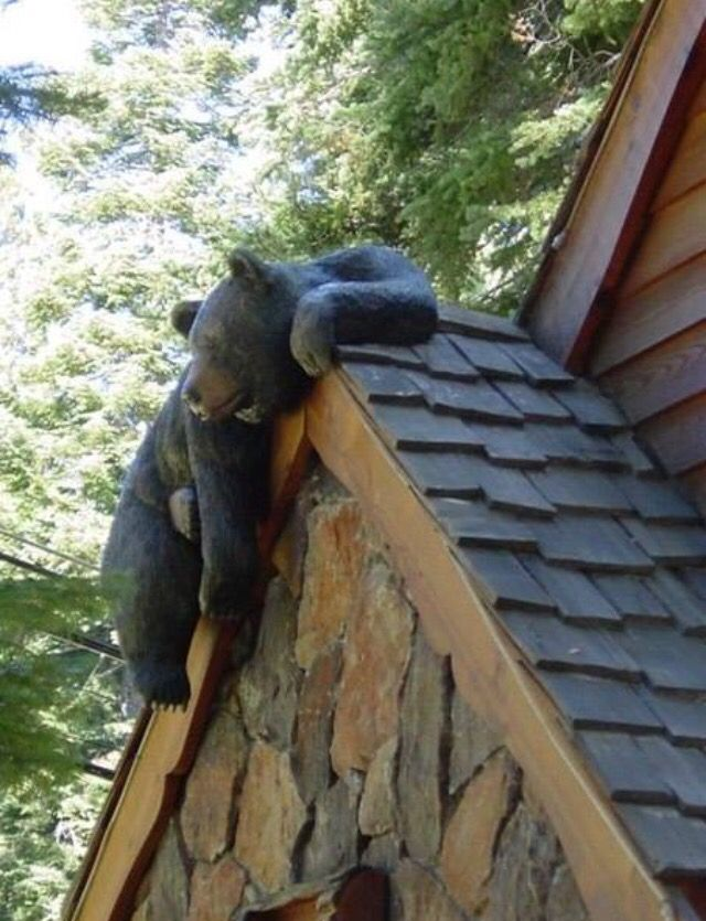 368 best images about black bear decor on pinterest for Rustic bear home decor