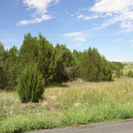 mobile home allowed - 1.47 acre parcel - vacant rural land for sale