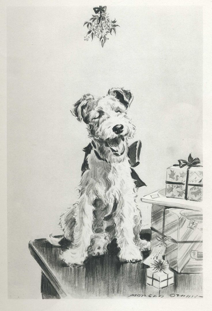 525 best Wire Haired Fox Terriers!! images on Pinterest | Wire fox ...