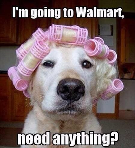 Walmart People Have Walmart Dogs