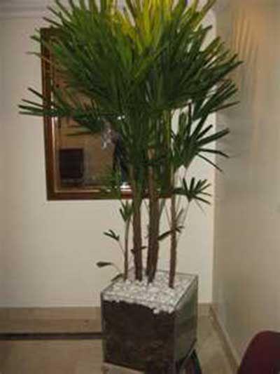 25 melhores ideias sobre plantas artificiais para sala no for Plantas decorativas artificiales df
