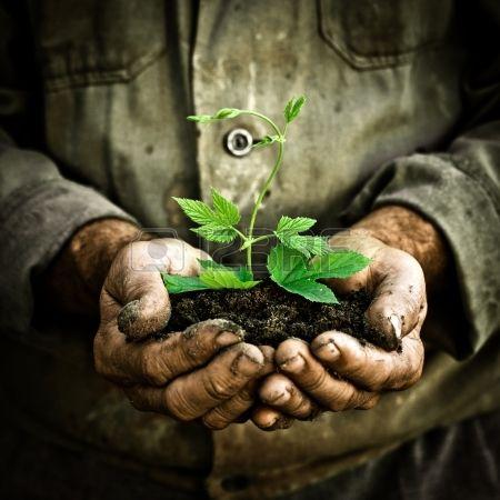 Veteranos hombre con una planta joven verde. Símbolo de la primavera y el concepto de ecología Foto de archivo